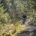 Photo of David KIDD (mas) at Gisburn Forest