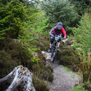 Photo of David SMITH at Ballinastoe Woods, Co. Wicklow