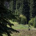 Photo of Grady FOCHUK at Sun Peaks, BC