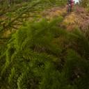 Photo of ? at Laggan Wolftrax
