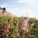 Photo of Tristan SANDERS at Sun Peaks