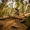 Photo of Matt DENNIS (vet) at Dalby Forest