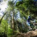 Photo of Clive POWELL at Forest of Dean