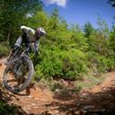 Photo of Adam HALLING at Dyfi Forest