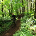 Photo of Andrew CLAIBORNE at Capitol Forest, WA