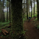 Photo of ? at Capitol Forest, WA
