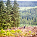 Photo of Phil HARKER at Ae Forest
