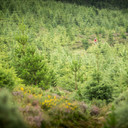 Photo of Nigel GLYNN at Ballyhoura Woods, Co. Limerick