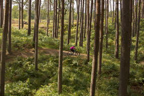 Photo of Loe FREER at Swinley Forest