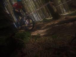 Photo of Timmy O'DRISCOLL at Ballinastoe Woods