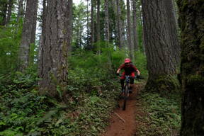 Photo of Amy MORRISON at Capitol Forest