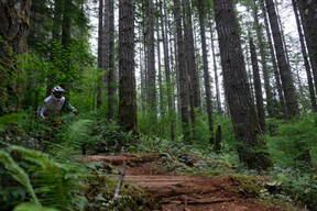 Photo of David THOMS at Capitol Forest