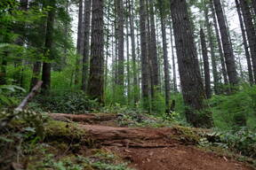 Photo of Craig FERENCIK at Capitol Forest