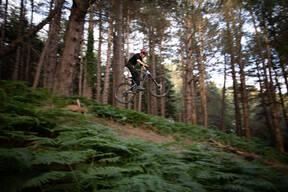 Photo of Brendan CONROY at Barnaslingan Forest