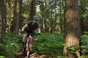 Photo of Adam FORRISTAL at Barnaslingan Forest
