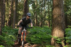 Photo of Adam FORRISTAL at Barnaslingan Forest