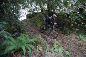 Photo of Toby MURPHY at Dyfi Forest