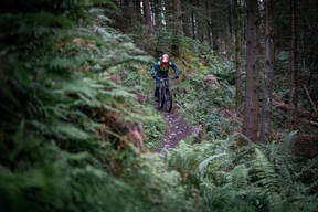 Photo of Scott FISHER (juv) at Kirroughtree Forest