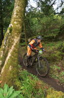 Photo of Pat COLLINS (vet) at Sligo